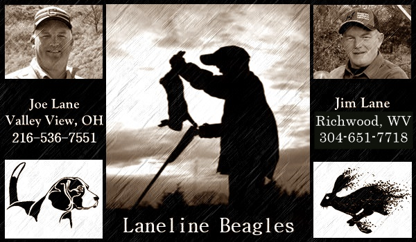 Laneline - Hunting Beagle History & Informational Site